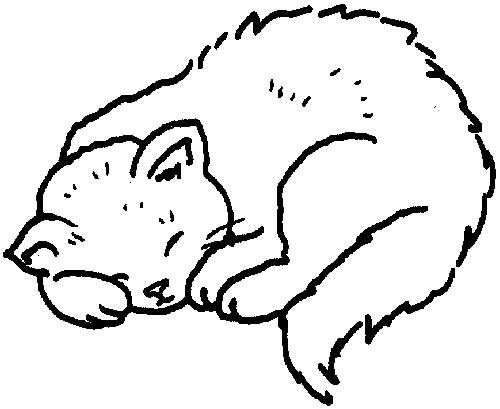 imagens-de-felinos