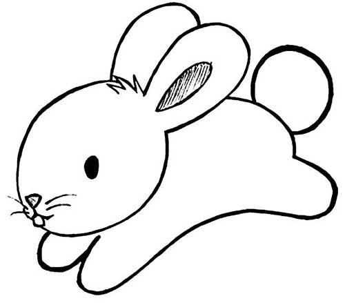 coelho-pulando