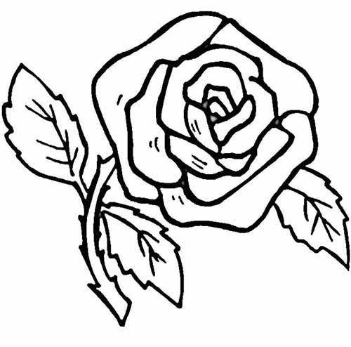 rosa-com-espinhos