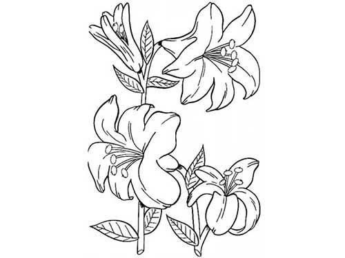 50 Desenhos De Flores Para Colorirpintar Em Casa