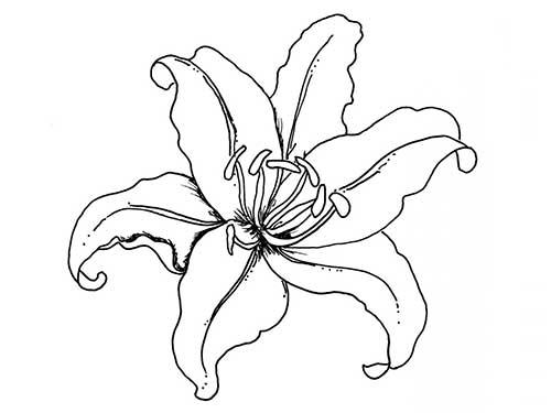 50 Desenhos De Flores Para Colorir Pintar Em Casa