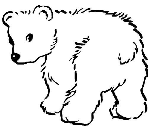 Desenhos-de-Urso