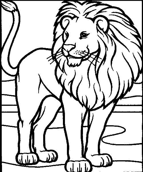 rei-da-selva