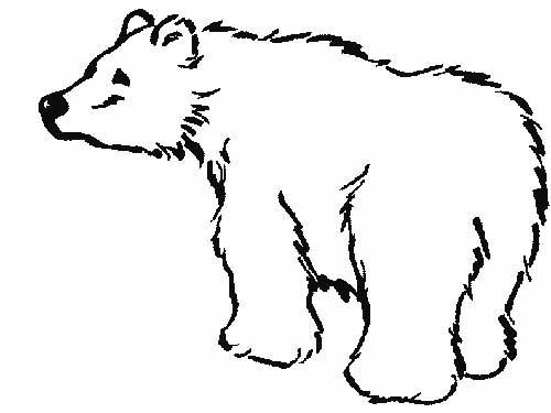 urso-selvagem