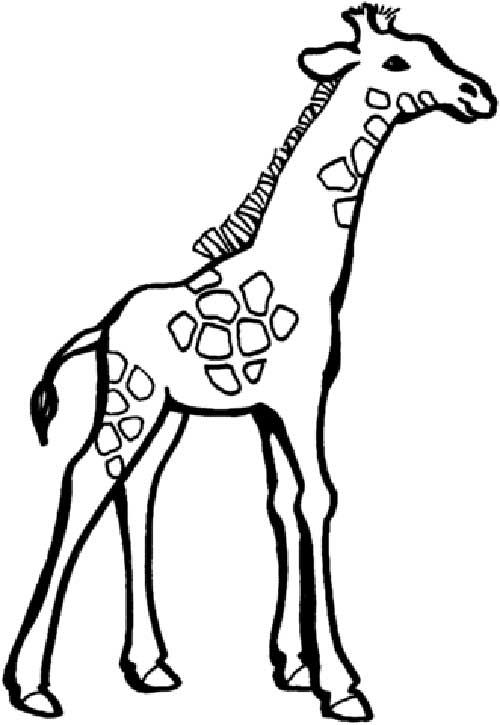 30 Desenhos De Girafa Para Pintarcolorir E Imprimir