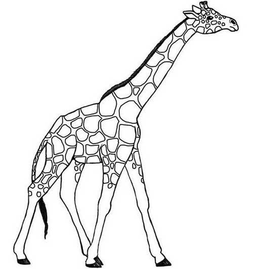 30 Desenhos De Girafa Para Pintar Colorir E Imprimir