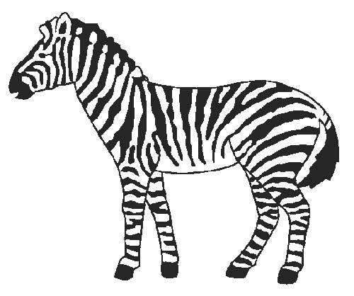 30 Desenhos De Zebra Para Pintar Colorindo Org