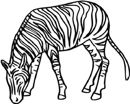 Desenhos-de-Zebra-4