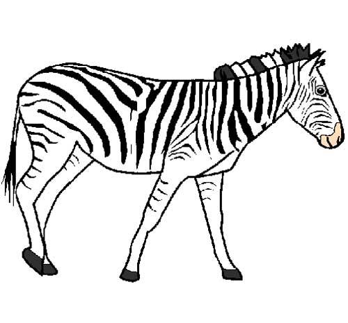 Desenhos-de-Zebra