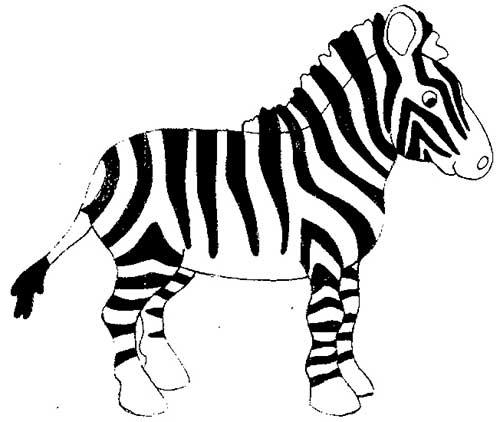 zebra-linda