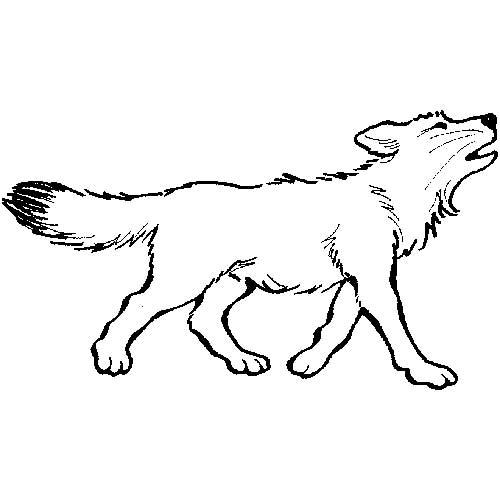 cachorro-1