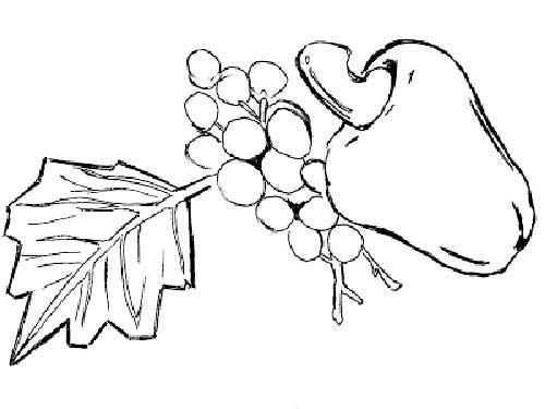 caju-e-uva