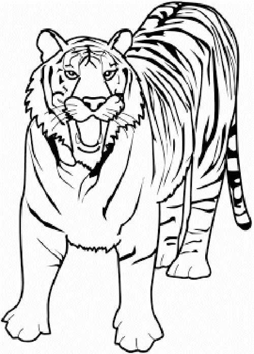 african tiger coloring pages - photo#5