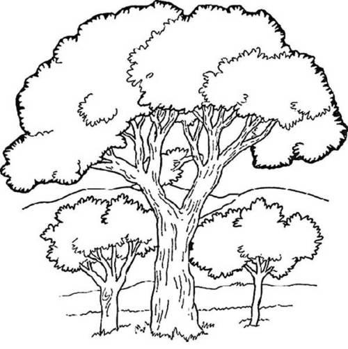 45 Desenhos De Florestas, Bosques E Matas Para Colorir Em Casa