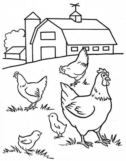 galinhas felizes