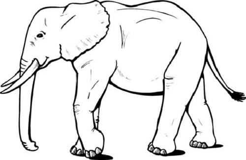 elefantes para colorir