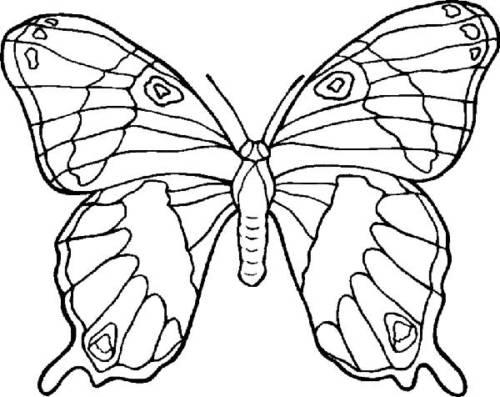 imagens de desenho de borboleta