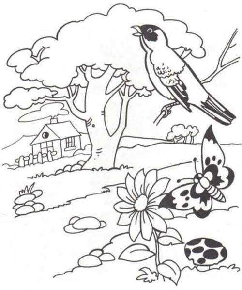 49 Desenhos Da Natureza Para Colorir Em Casa E Se Divertir